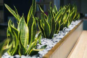 Indoor Plant Hire Brisbane